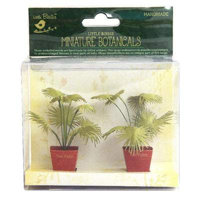 Miniature Botanical Fan Palm 2pcs
