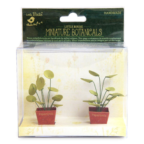 Miniature Botanical Peperomia 2pcs