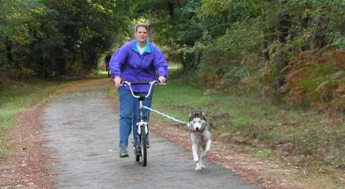 Tug Line Safety Spring - Walk your dog while bike riding!