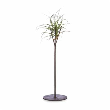 Air Plant Holder LG