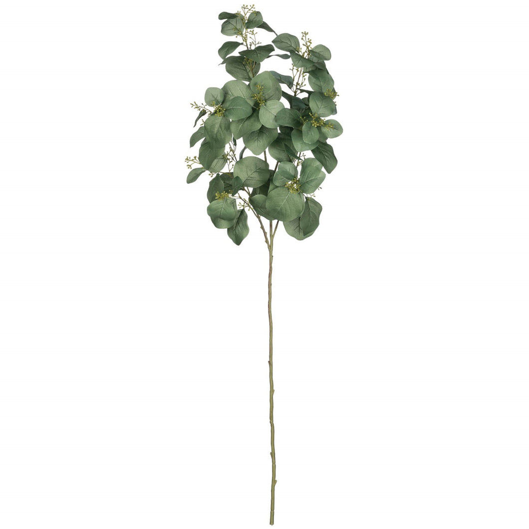 Eucalyptus Spray Long Stem