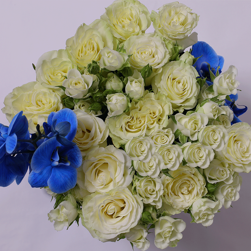 Mille Rose Collection - Medium Box - Rose Bianche e Orchidea Blu - Scatola Bianca