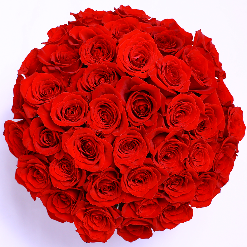 Mille Rose Collection - Medium Box - Rose Rosse Sfera - Scatola Bianca
