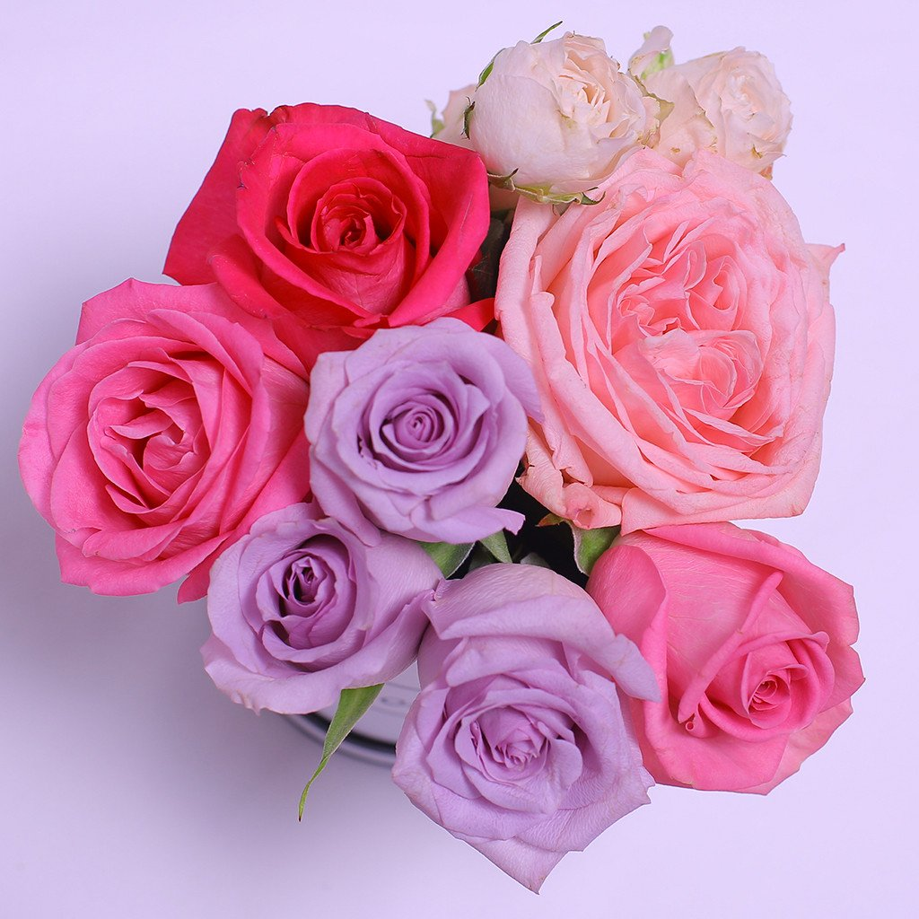 Mille Rose Collection - Mini Box - Rose Mix Rosa Lilla Fucsia - Scatola Bianca