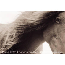 Load image into Gallery viewer, THE WILD HORSES OF SABLE ISLAND
