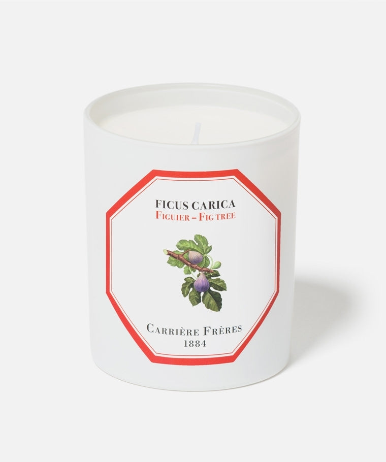 FIG TREE FICUS CARICA CANDLE