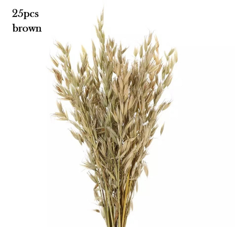 Floral stem wheat pampas (25pc multiple colours)