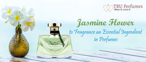 Jasmine Flower to Fragrance: An Essential Ingredient in Perfumes