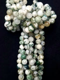 "Tree Agate (Round)(Smooth)(16""Strand)"