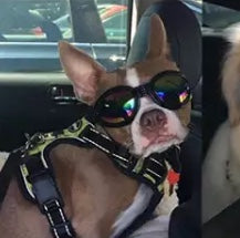 Cool Foldable Dog Sunglasses Pet Eye Protection - [presents_for_him_and_her].