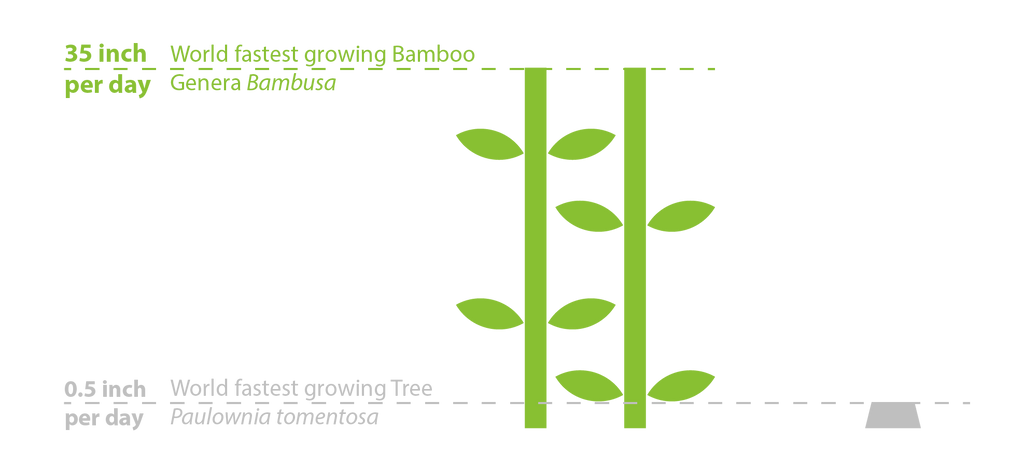 diagram fastest growing bamboo