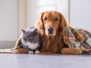 Keeping Your Pets Comfortable This Winter