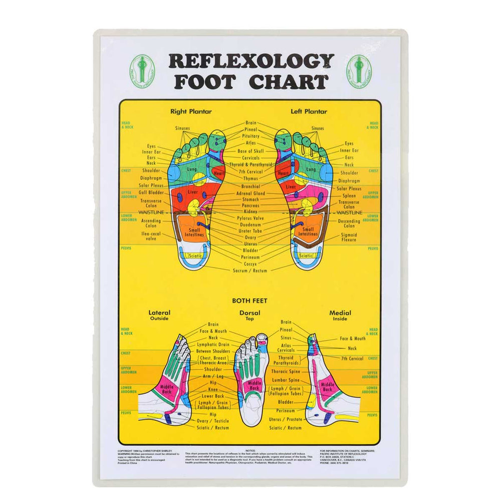 Wholesale Foot Reflexology Chart