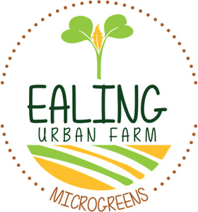 Ealing Urban Farm
