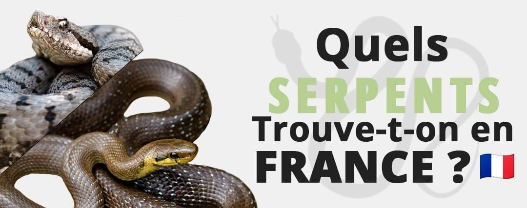Quels Serpents Trouve-t-on en France ?