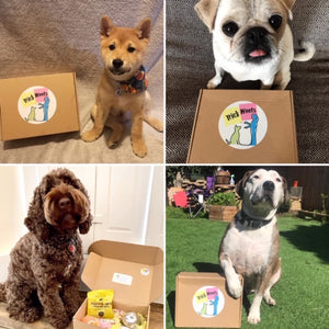 Personalized online dog training package