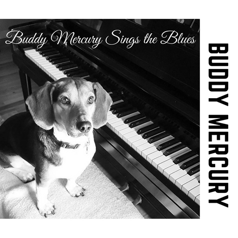 Buddy Mercury the singing piano playing beagle who portrays Freddie Mercury from the band Queen iTunes album cover