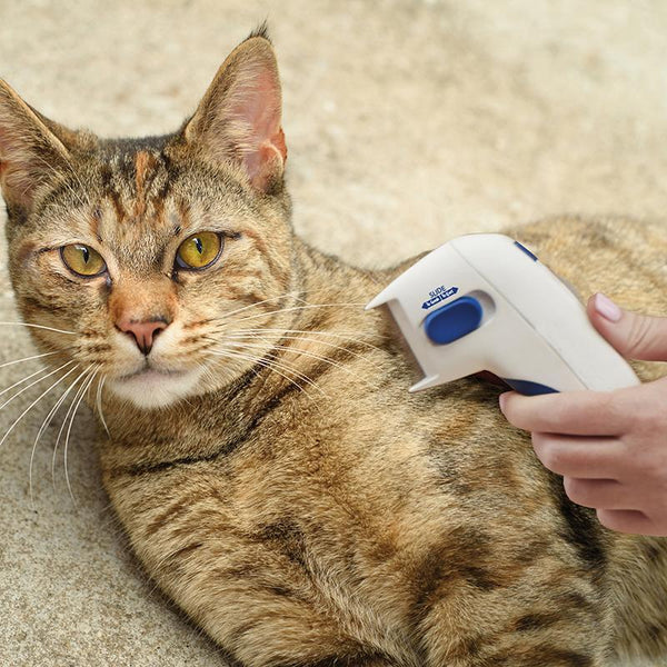 Electronic Lice Comb for Cats