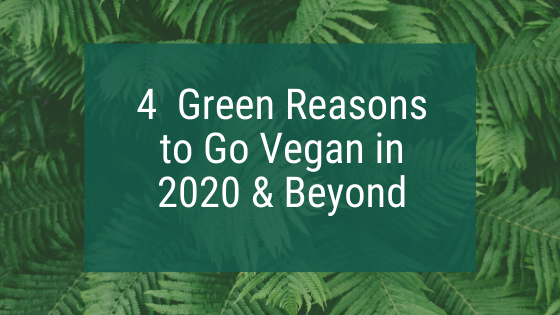 4 Green Reasons to Go Vegan in 2020 & Beyond
