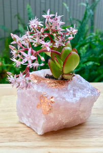 Rose Quartz Succulent Planters- Perfect Gift!