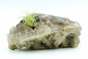 Smoky Quartz Point & Cluster with Air Plant