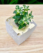 Load image into Gallery viewer, Selenite Succulent Planters - Cleanse your Home - Perfect gift!