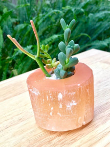 Selenite Succulent Planters - Cleanse your Home - Perfect gift!