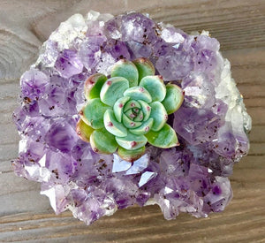 Amethyst Succulent Planter w/Gold, Silver, or Rose Gold Leaf detail- Perfect gift!