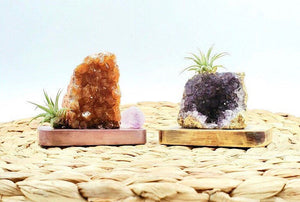Amethyst Crystal Air-plant- Perfect gift or Desk Decor!