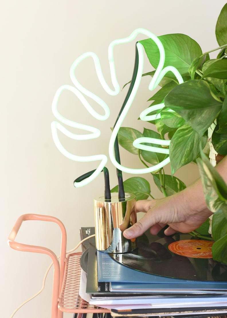 Monstera Neon Light - cara cara