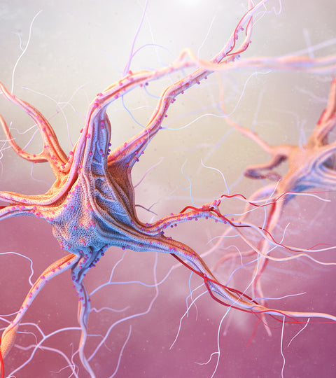Can Adults Grow More Neurons?