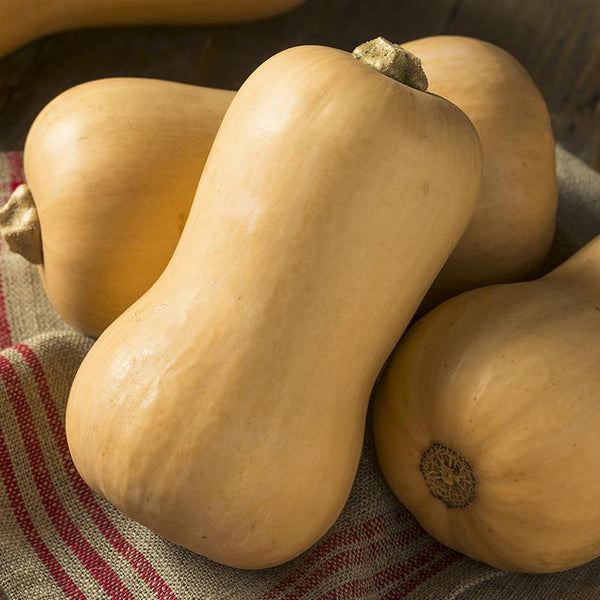 Butternut Vintersquash