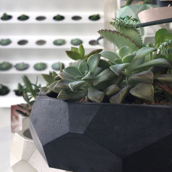 HEX Concrete planter
