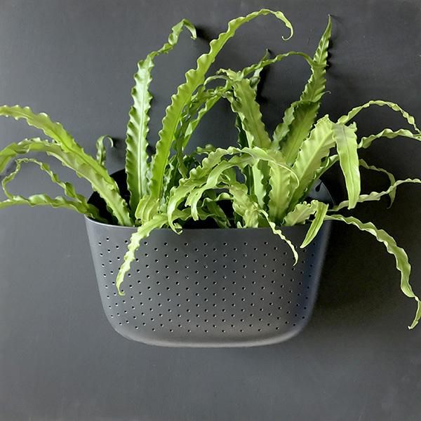 Eco Charcoal Wall Planter