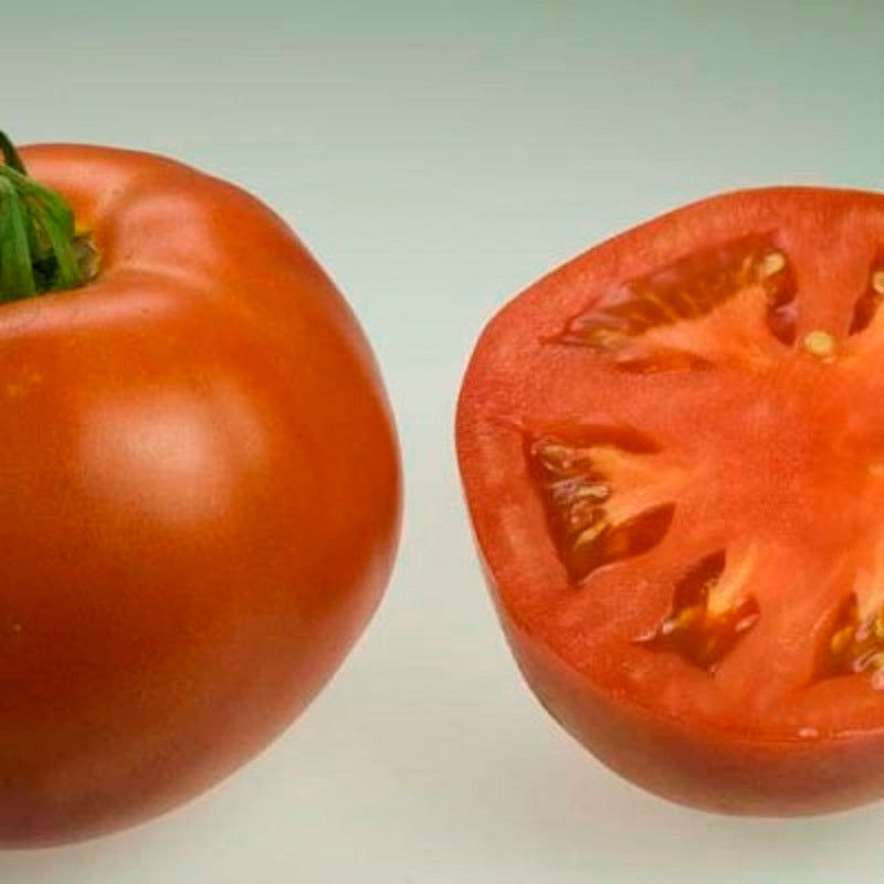 Organic Big Beef Tomato Seeds - 20 Seeds - Large standard tomato Not a beefsteak type, but very large. Grows in all USDA Zones