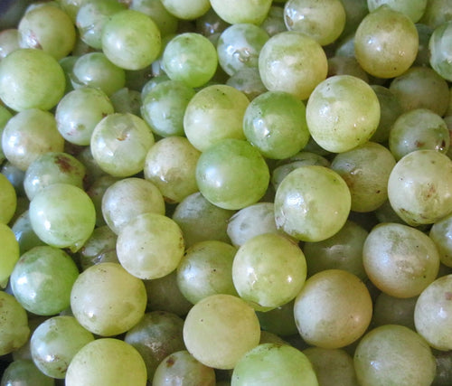 Organic Niagara Grape Seeds - 20 Seeds - Large juicy fruits with a sweet flavor, Very good table grape