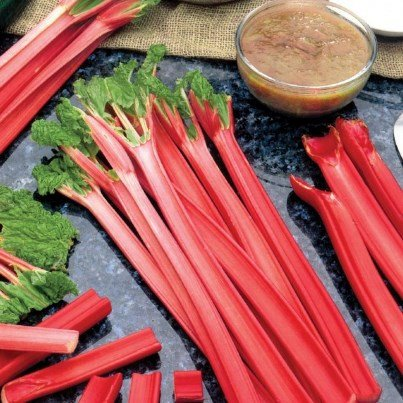 Organic Mammoth Red Rhubarb Seeds - Beautiful Red Stalks, Delicious Vegetable