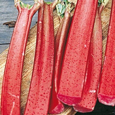 Organic Chipmans Rhubarb Seeds - Sweetest Variety, Color Won't Fade During Cooking