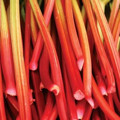 Organic Riverside Rhubarb Seeds - Beautiful, Plump, Red Stalks