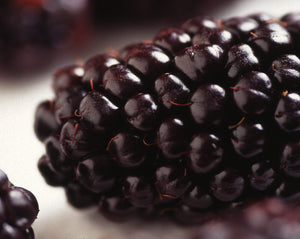 Organic Marion Blackberry Seeds - Vigorous Growth, Most Common - 20 Seeds