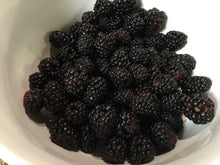 Load image into Gallery viewer, Organic Marion Blackberry Seeds - Vigorous Growth, Most Common - 20 Seeds