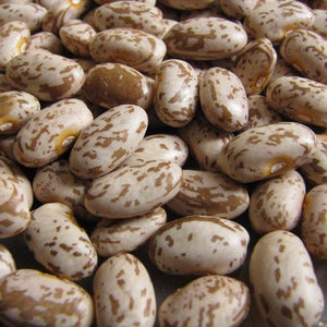 Organic Topaz Pinto Beans - Early Maturing, Amazing Delicious Bean - 2 Ounces
