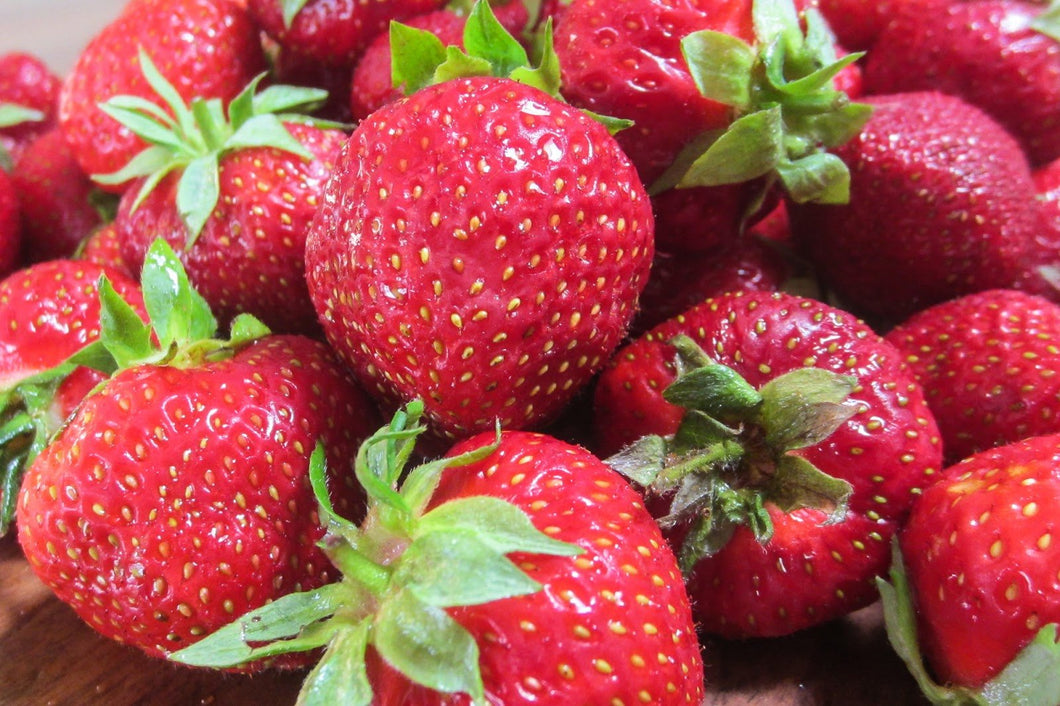 Organic Surecrop Strawberry - Massive, round, sweet, juicy, and simple to grow. Great container plants for growing anywhere - 25 Seeds