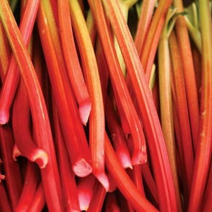 Organic Prince Albert Rhubarb Seeds - Early Variety, Provides Good crop of Long Stalks