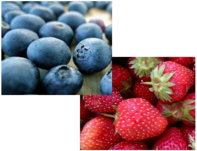 35 Organic Dwarf Tophat Blueberry Seeds And 25 Organic Jewel Strawberry Seeds