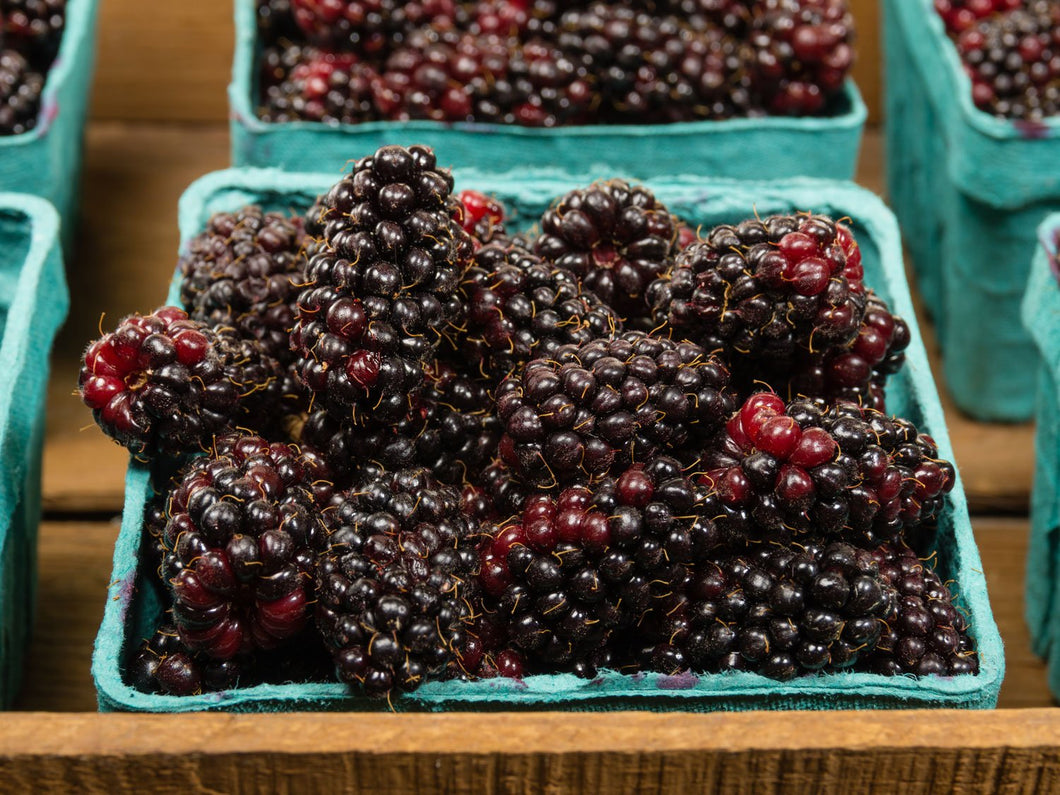 Organic Black Marionberry Seeds - Cross Breed, Complex, Rich Flavor - 25 Seeds