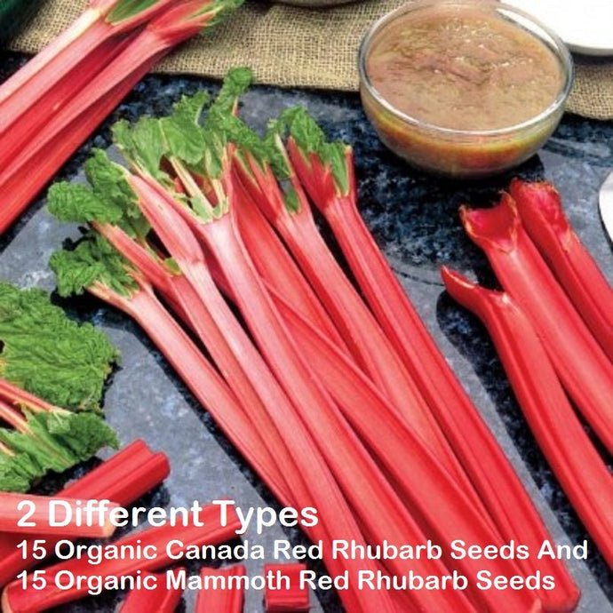 15 Organic Canada Red Rhubarb Seeds And 15 Organic Mammoth Red Rhubarb Seeds