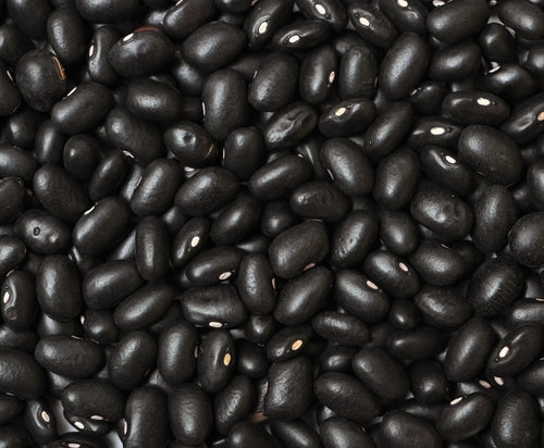 Organic Black Turtle Beans - Vigerous, Grows Well in All Regions - 2 Ounces