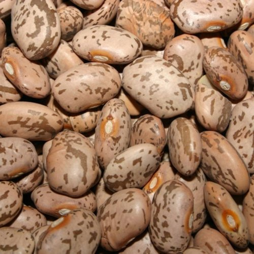 Organic Pinto Beans - Amazing Bean for Mexican Dishes! - 2 Ounces