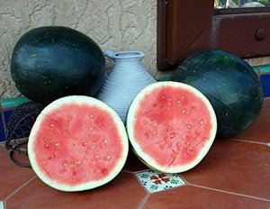 10 Organic Black Diamond Watermelon Seeds - Flavorful Flash, Crisp, Bright Red Color